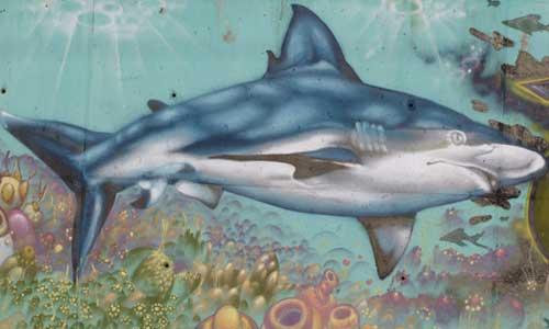 shark arte urbano galicia Digerible